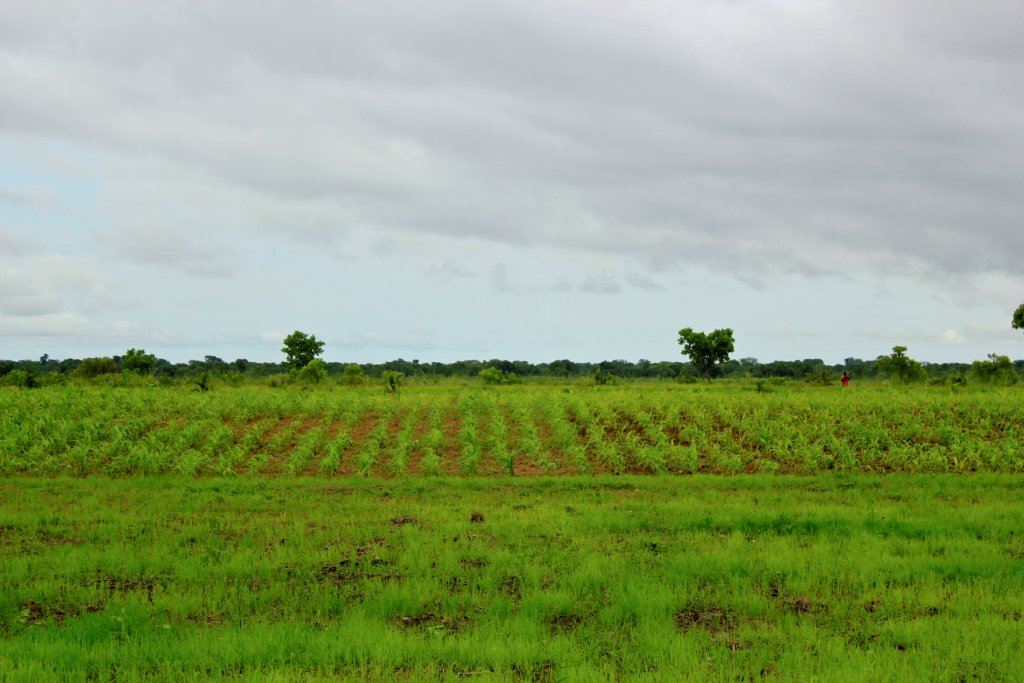 Part of Our Self-Sufficiency Agro Pastoral Project